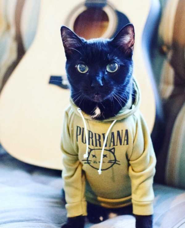 cute-cats-in-hoodies (9)