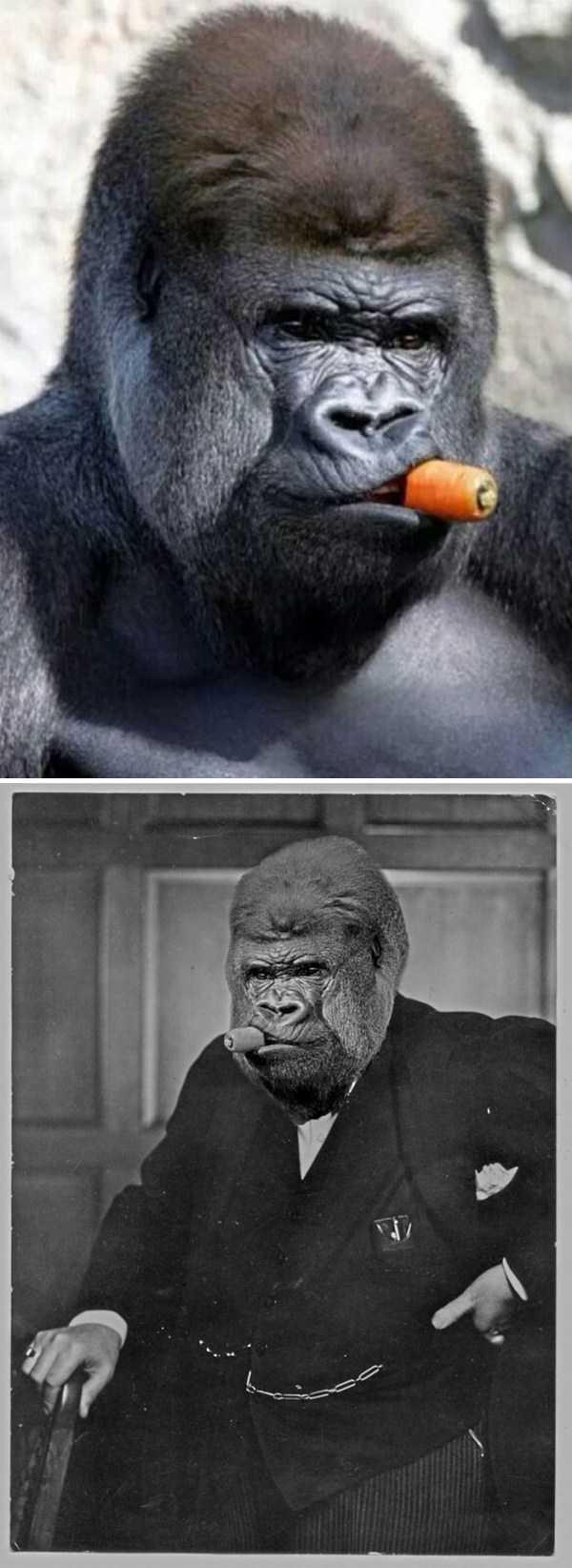 hilarious-photoshops (4)
