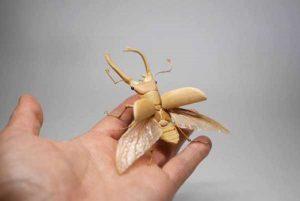 noriyuki-saitoh-bamboo-insects (11)