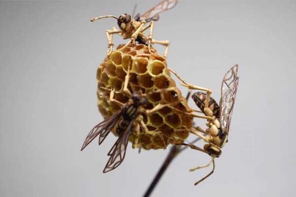 noriyuki-saitoh-bamboo-insects (13)