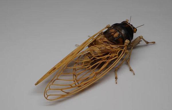 noriyuki-saitoh-bamboo-insects-14