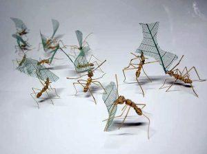 noriyuki-saitoh-bamboo-insects-15