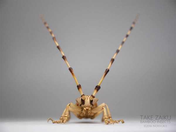 noriyuki-saitoh-bamboo-insects (2)