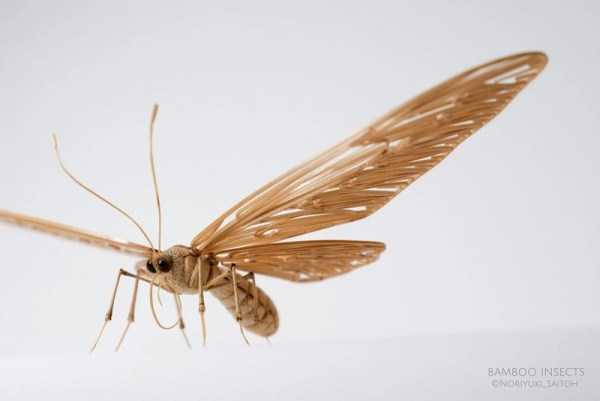 noriyuki-saitoh-bamboo-insects (5)