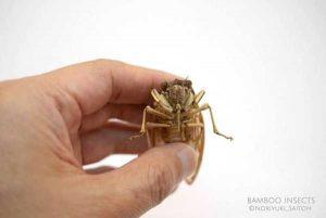 noriyuki-saitoh-bamboo-insects (8)