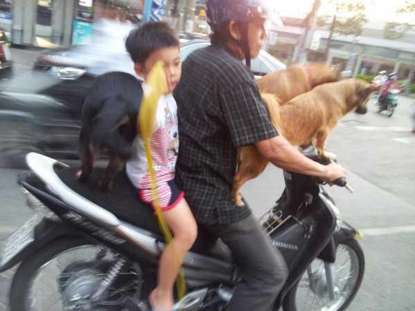 funny-asia-pics (8)
