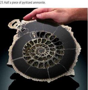 items-cut-in-half (23)