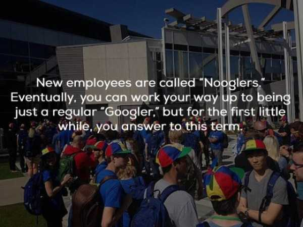 google-facts (20)