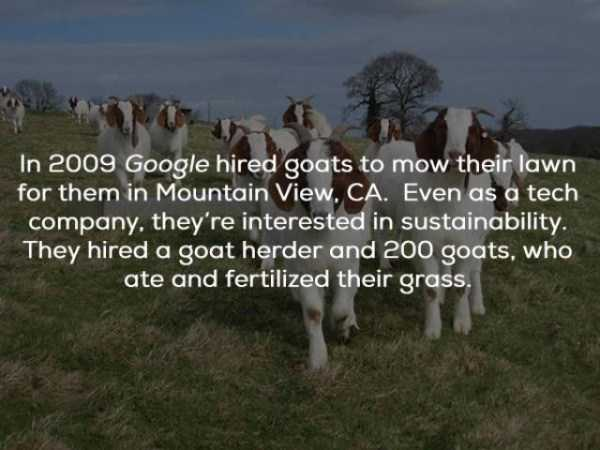 google-facts (9)