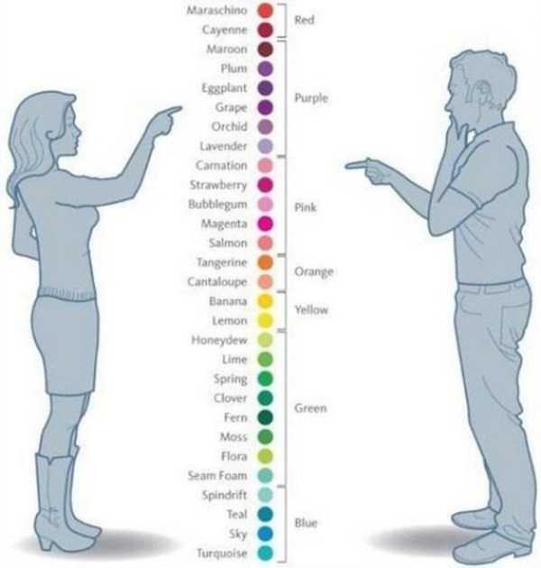 men-women-differencies (2)
