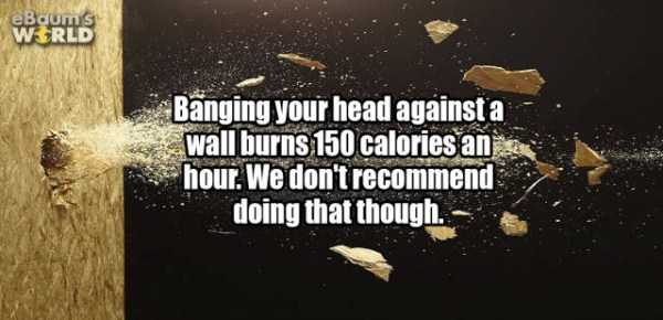 more-fun-facts (42)