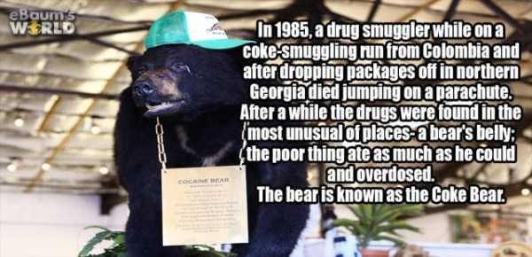 more-fun-facts (50)