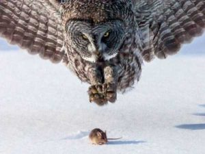 perfectly-timed-pics (20)