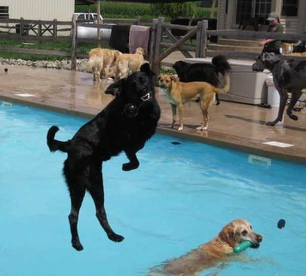 perfectly-timed-pics (33)
