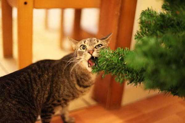 pets-hate-holidays (10)