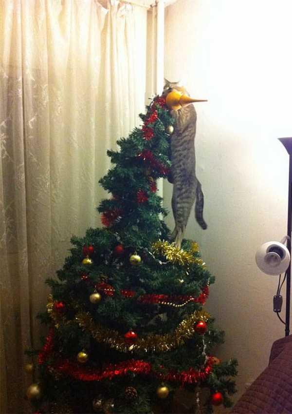 pets-hate-holidays (12)
