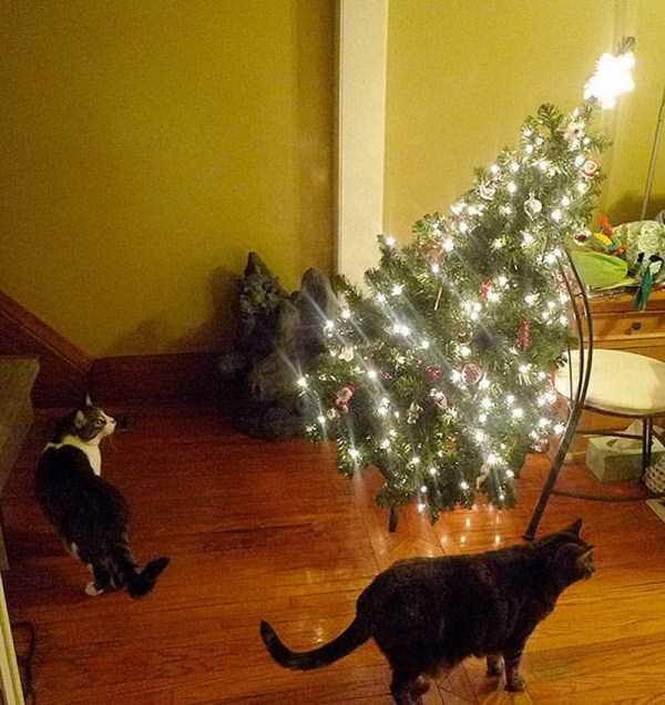 pets-hate-holidays (13)