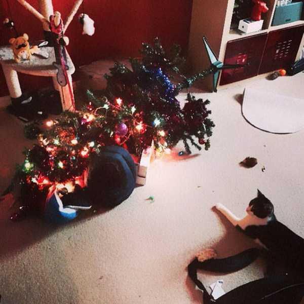 pets-hate-holidays (14)