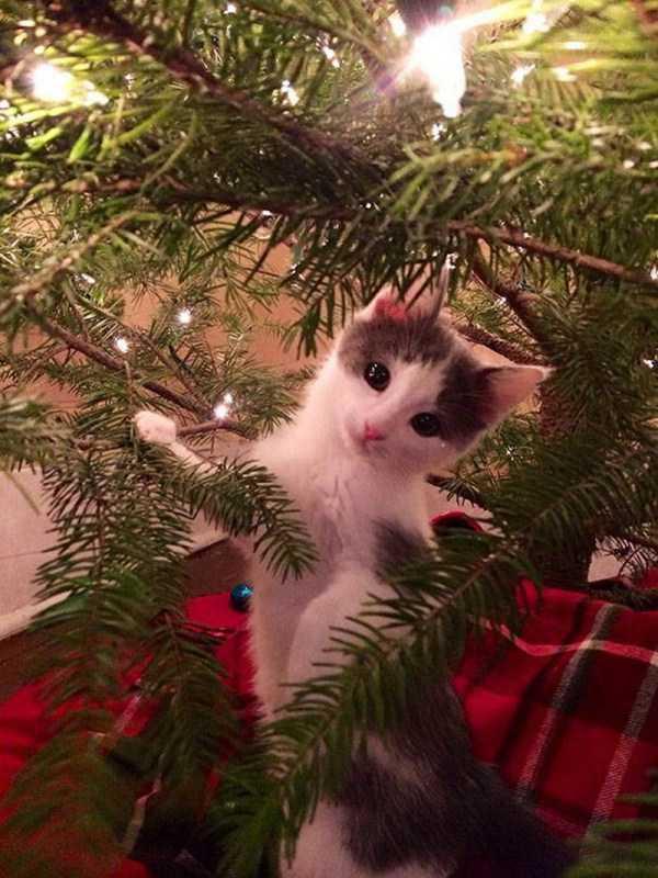 pets-hate-holidays (18)