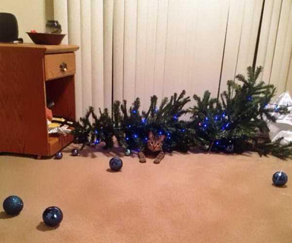 pets-hate-holidays (2)