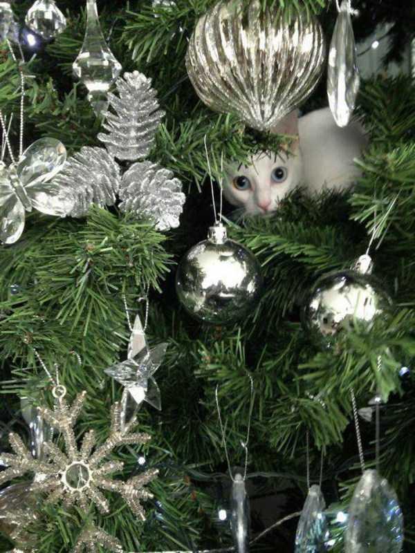 pets-hate-holidays (22)