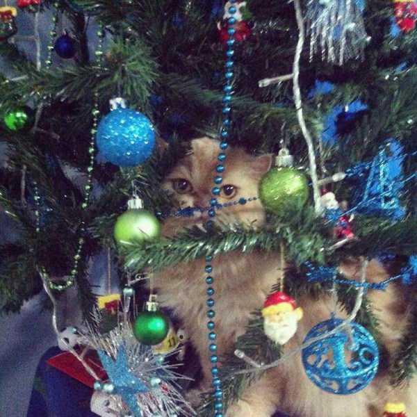 pets-hate-holidays (25)