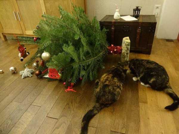 pets-hate-holidays (26)