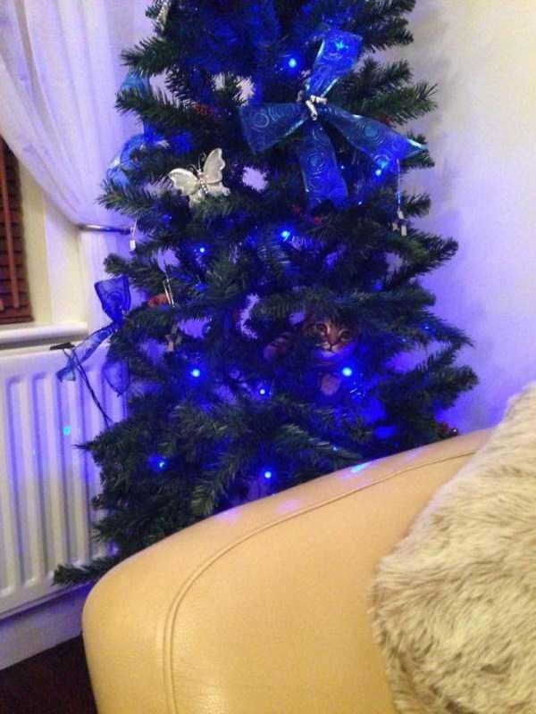 pets-hate-holidays (27)