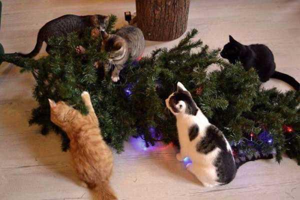 pets-hate-holidays (29)