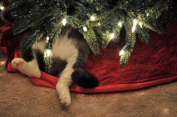 pets-hate-holidays (30)