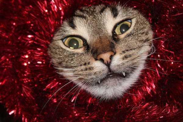 pets-hate-holidays (31)