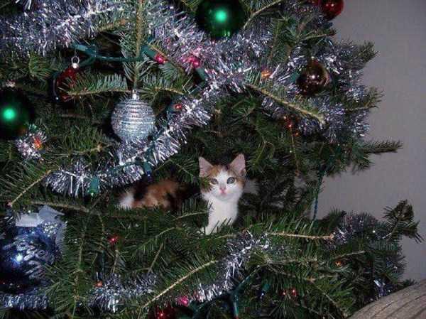 pets-hate-holidays (34)