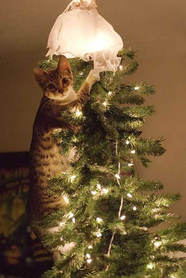 pets-hate-holidays (6)