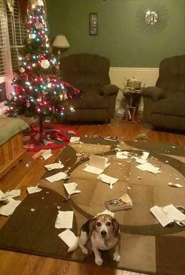 pets-hate-holidays (8)