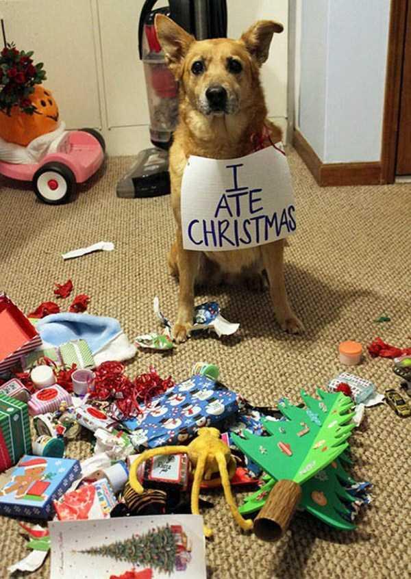 pets-hate-holidays (9)