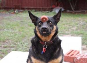 wtf-dogs (1)