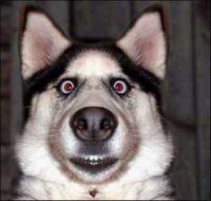 wtf-dogs (4)