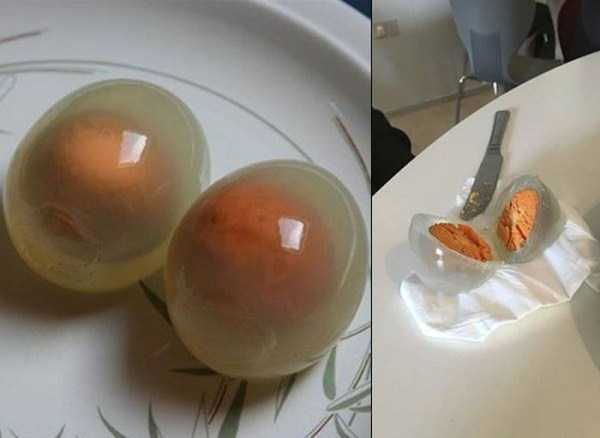 boiled-penguin-eggs (3)