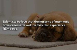 dreaming-facts (16)