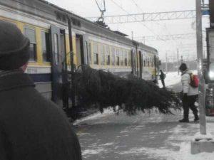 funny-winter-photos (12)