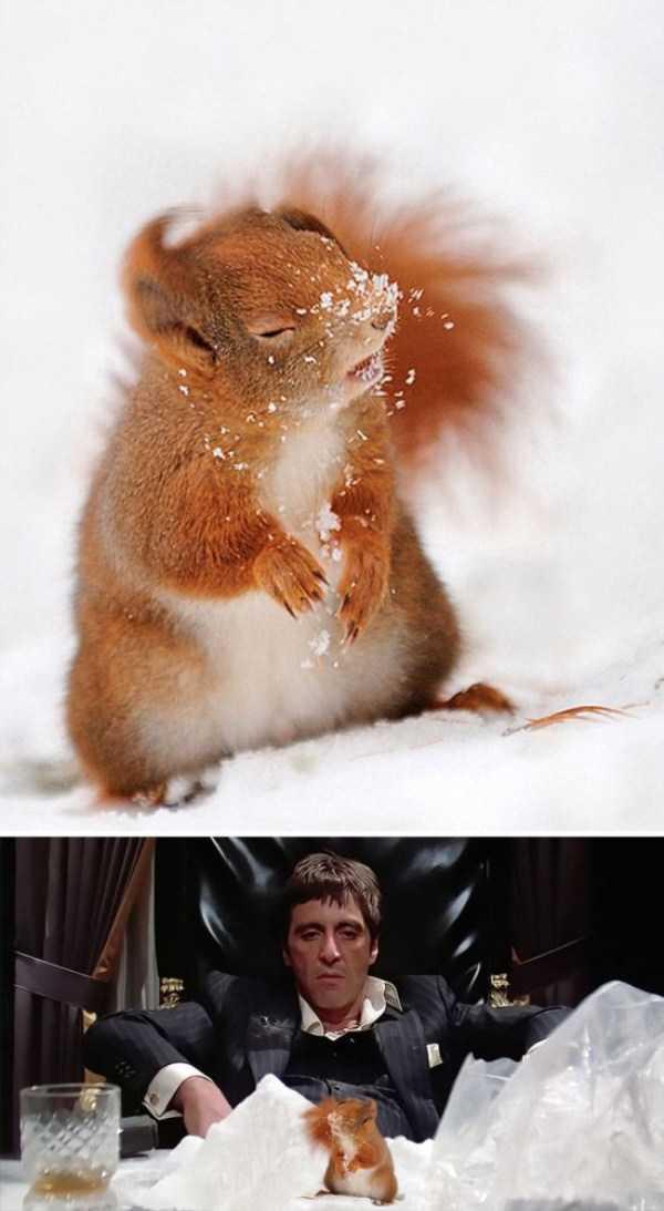 hilarious-photoshop-battles (14)