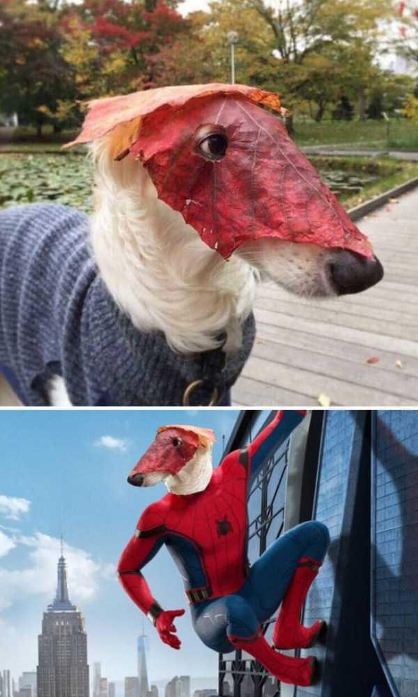 hilarious-photoshop-battles (15)
