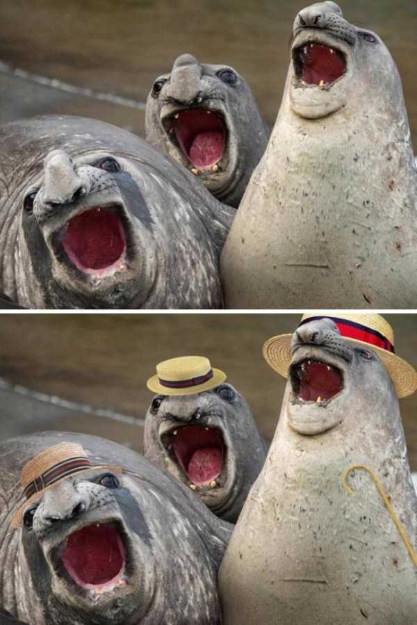 hilarious-photoshop-battles (8)