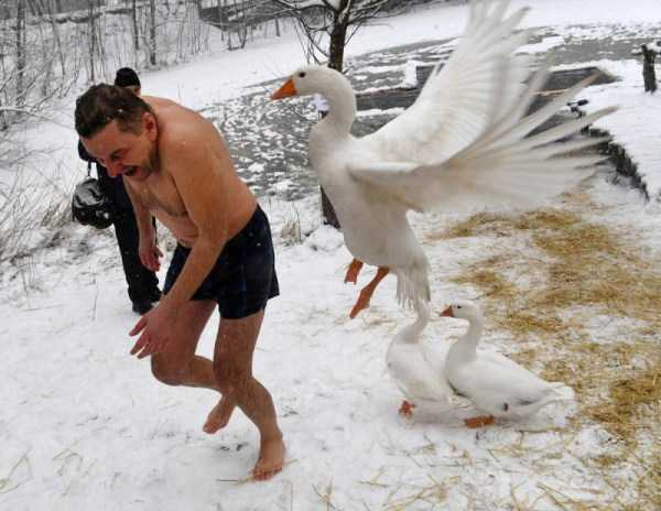 perfectly-timed-photos (1)