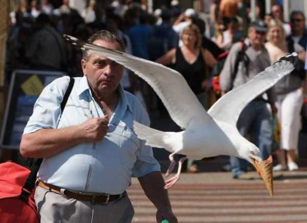perfectly-timed-photos (25)