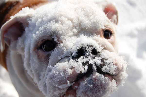 pets-snow-day (12)