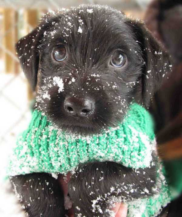 pets-snow-day (17)