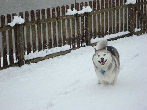 pets-snow-day (19)