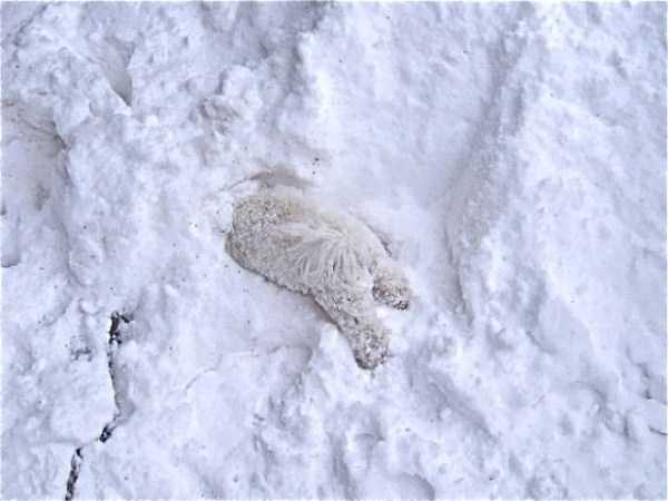 pets-snow-day (22)