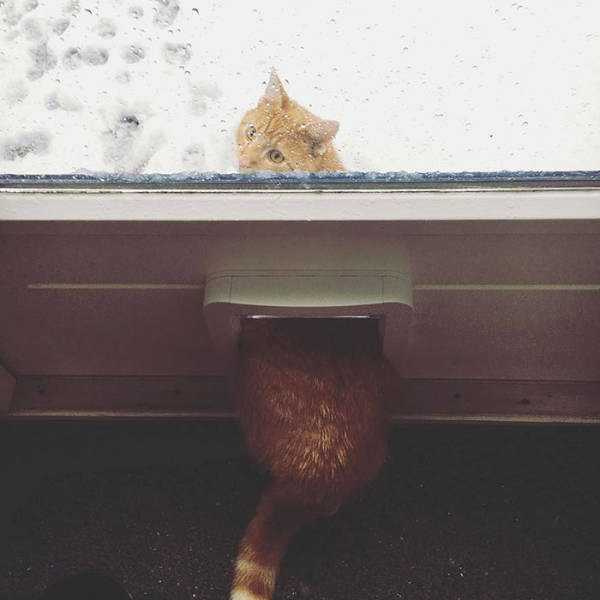 pets-snow-day (26)